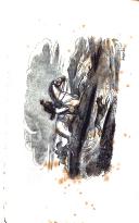 Страница 24